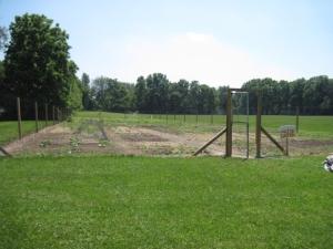 Ingham school garden