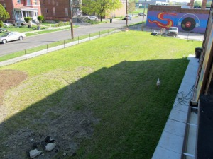 Vacant lot in Detroit, spring 2012, will become CommonHarvest.