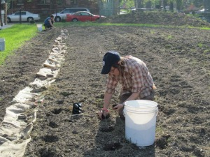 Janelle Palmer plants crops in the CommonHarvest lot.