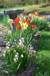 flowers by birdbath