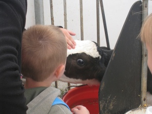 A Breakfast on the Farm attendee at the Reid Dairy Farm in Jeddo, Mich., June 15, 2013.