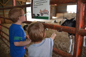 Two young attendees learn about dairy farming at the Calhoun County Breakfast on the Farm, July 19, 2014, at the Crandall Dairy Farm